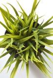 Kaktusowej rośliny garnka tłustoszowate rośliny Zdjęcia Royalty Free