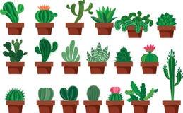 kaktusowej rośliny ustalony tłustoszowaty typ Zdjęcie Royalty Free
