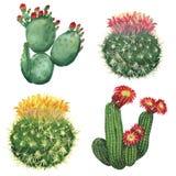 kaktusowej rośliny ustalony tłustoszowaty typ royalty ilustracja