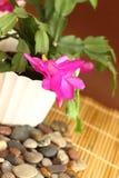 kaktusowi boże narodzenia Zdjęcia Stock
