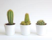 Kaktusowi houseplants Zdjęcia Stock