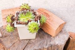 Kaktusowi i drewniani bagażniki fotografia stock