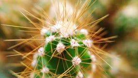 Kaktusowi kolce Zdjęcie Stock