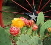 Kaktusowi kwiaty fotografia royalty free