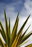 Kaktusowi liście Zdjęcia Stock