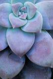 Kaktusowi sukulenty w plantatorze Fotografia Royalty Free