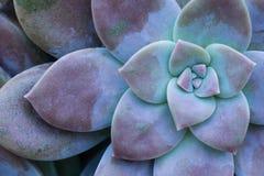 Kaktusowi sukulenty w plantatorze Zdjęcia Royalty Free