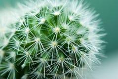 kaktusowi szczegóły Zdjęcie Royalty Free