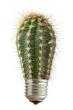 kaktusowy żarówki dorośnięcie fotografia royalty free