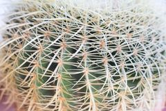 Kaktusowy abstrakt Obrazy Royalty Free