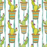 Kaktusowy bezszwowy wzór Kolorowa kreskówka kwitnie w garnkach Wektorowy tło dla zawijać, tkaniny i pakunku projekta, Zdjęcie Royalty Free