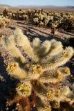 kaktusowy cholla Joshua park narodowy drzewo Fotografia Royalty Free