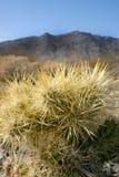 kaktusowy cholla ogródu Joshua park narodowy drzewo Obrazy Stock