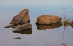 kaktusowy cholla ogródu Joshua park narodowy drzewo Zdjęcia Royalty Free