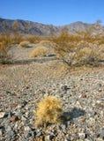 kaktusowy cholla ogródu Joshua park narodowy drzewo Fotografia Royalty Free