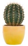 kaktusowy garnek Zdjęcie Stock