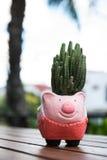 Kaktusowy garnek Obraz Stock