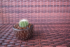 Kaktusowy garnek z kawową fasolą zdjęcie royalty free