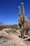 kaktusowy humahuaca zdjęcie royalty free