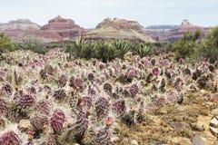 kaktusowy jar uroczysty Zdjęcia Royalty Free