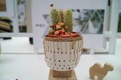 Kaktusowy jardiniere Fotografia Royalty Free