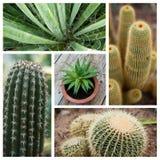 Kaktusowy kolaż Obrazy Stock
