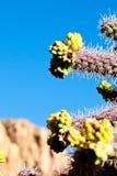Kaktusowy kwiat Zdjęcia Royalty Free