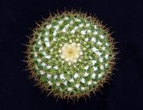 kaktusowy kwiat fotografia royalty free