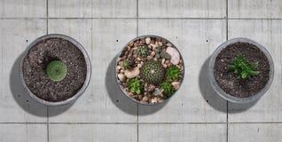 Kaktusowy mockup set Zdjęcie Stock