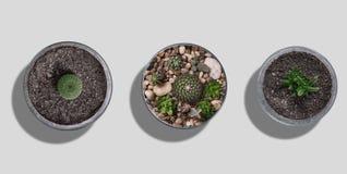 Kaktusowy mockup set Obraz Stock