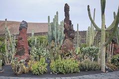 Kaktusowy ogród zdjęcia stock
