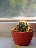 kaktusowy okno Fotografia Stock