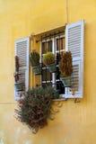 Kaktusowy okno Obrazy Stock