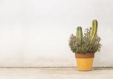Kaktusowy plantatorski horyzontalny Fotografia Stock