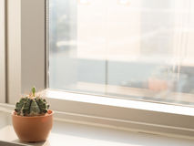 Kaktusowy pobliski nadokienny szkło z ciepłym brzmieniem, miasto widok, kopii przestrzeń Obrazy Royalty Free