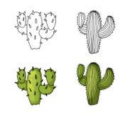 Kaktusowy ręka rysunek i barwiący naturalny zielony wapno z cieniami ilustracja wektor