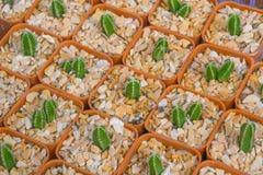 Kaktusowy rodzaju wzór Obraz Stock