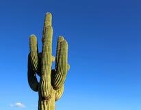 Kaktusowy Saguaro na błękicie Fotografia Royalty Free