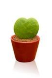 kaktusowy serce kształtował Fotografia Stock