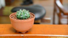 Kaktusowy tło i dekorujący na stole zdjęcia stock