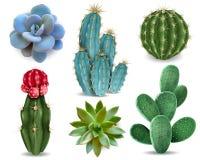 Kaktusowy Tłustoszowaty Realistyczny set ilustracji