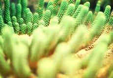 Kaktusowy tło Fotografia Stock