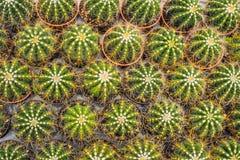 Kaktusowy tło wzór Mali kaktusy w garnkach Obrazy Stock