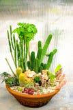 Kaktusowy taca ogród Fotografia Stock