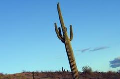 kaktusowy target54_0_ Zdjęcia Royalty Free