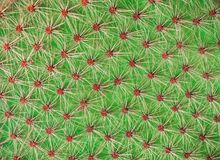 Kaktusowy tekstury zbliżenie Jaskrawy - zielony kaktusowy opuntia tło Fotografia Royalty Free