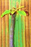 Kaktuspastellton auf Hintergrund Kopieren Sie Platz Stockbild