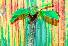 Kaktuspastellton auf Hintergrund Kopieren Sie Platz Stockbilder