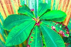 Kaktuspastellton auf Hintergrund Kopieren Sie Platz Stockfotografie