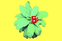 Kaktuspastellton auf Hintergrund Kopieren Sie Platz Lizenzfreies Stockbild